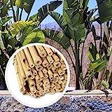 HAPPERS Valla Bambú Natural para Jardín o Terraza. Rollo de cañas de 200cm x 200cm