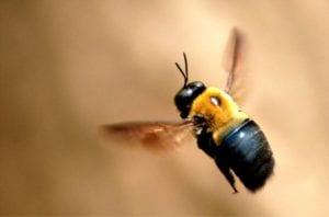 abejas de madera